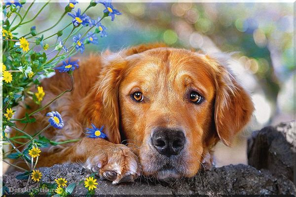 стихи про собак